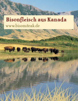 Bisons in Kanada